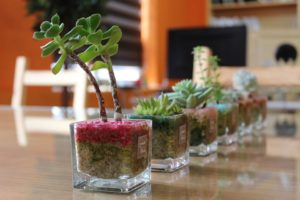 Row of succulents on a table