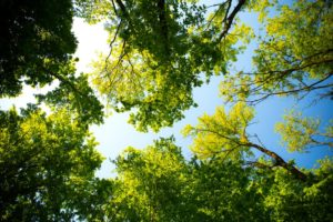 Trees and blue sky above