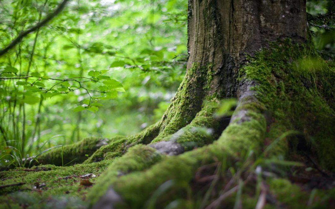 moss growing on a tree